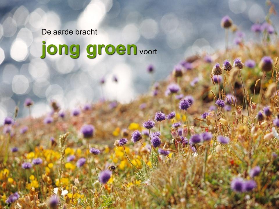 De aarde bracht jong groen voort
