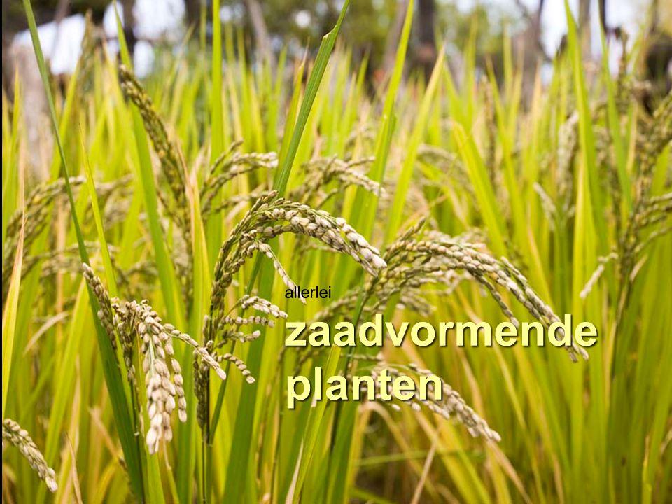 allerlei zaadvormende planten