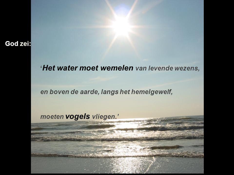 God zei: 'Het water moet wemelen van levende wezens, en boven de aarde, langs het hemelgewelf, moeten vogels vliegen.'