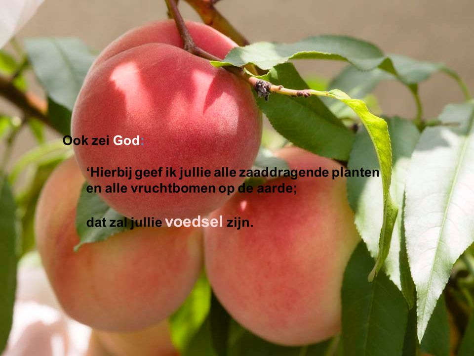 Ook zei God: 'Hierbij geef ik jullie alle zaaddragende planten.