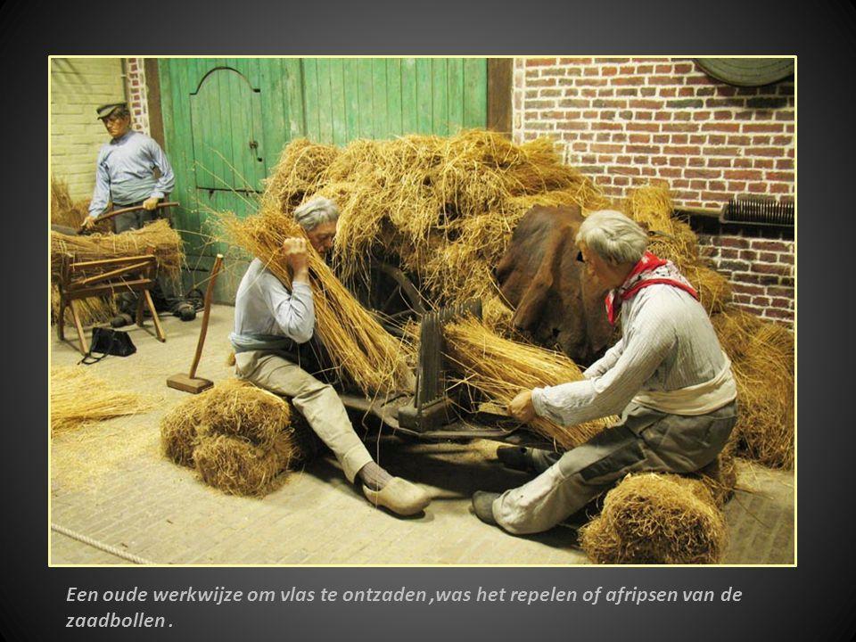 Een oude werkwijze om vlas te ontzaden ,was het repelen of afripsen van de zaadbollen .