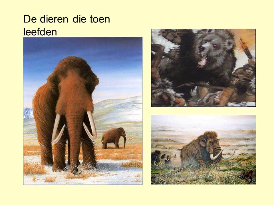 De dieren die toen leefden