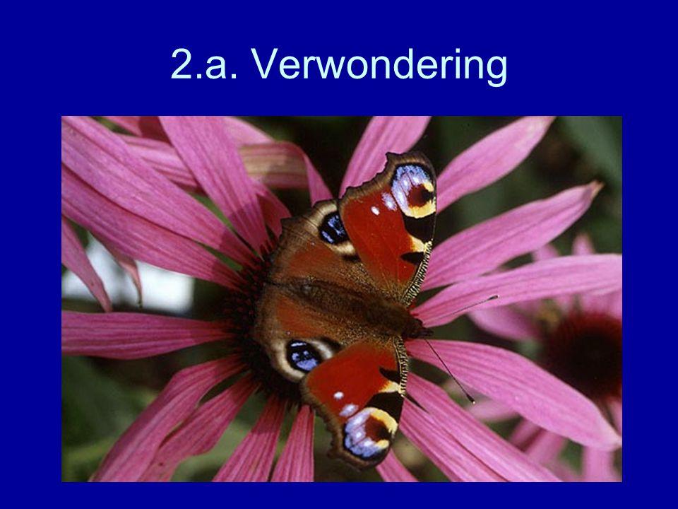 2.a. Verwondering