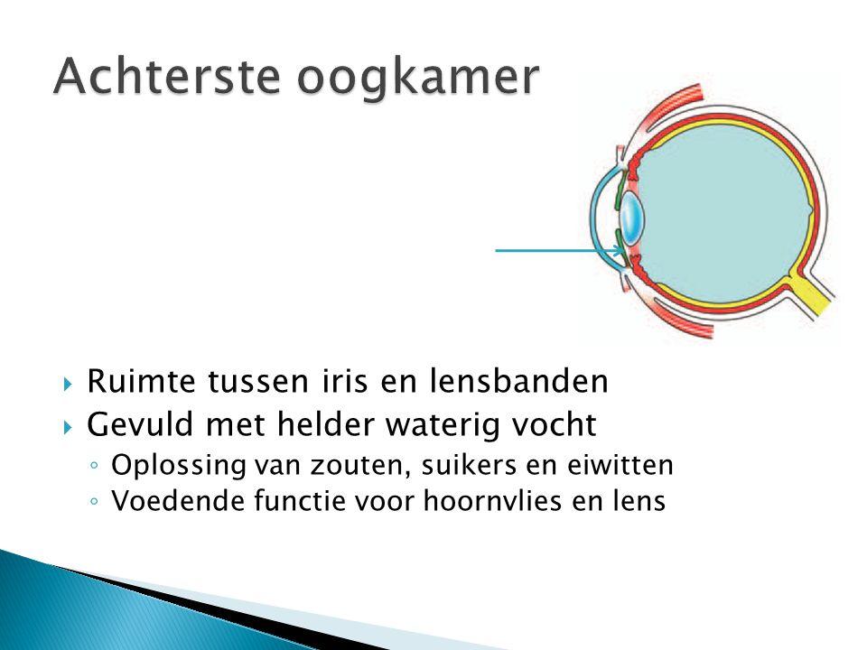 Achterste oogkamer Ruimte tussen iris en lensbanden