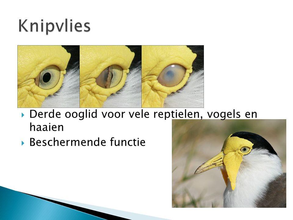 Knipvlies Derde ooglid voor vele reptielen, vogels en haaien