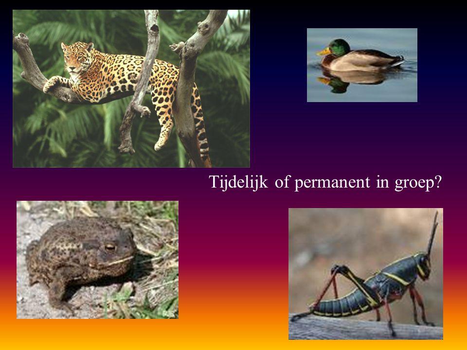 Tijdelijk of permanent in groep