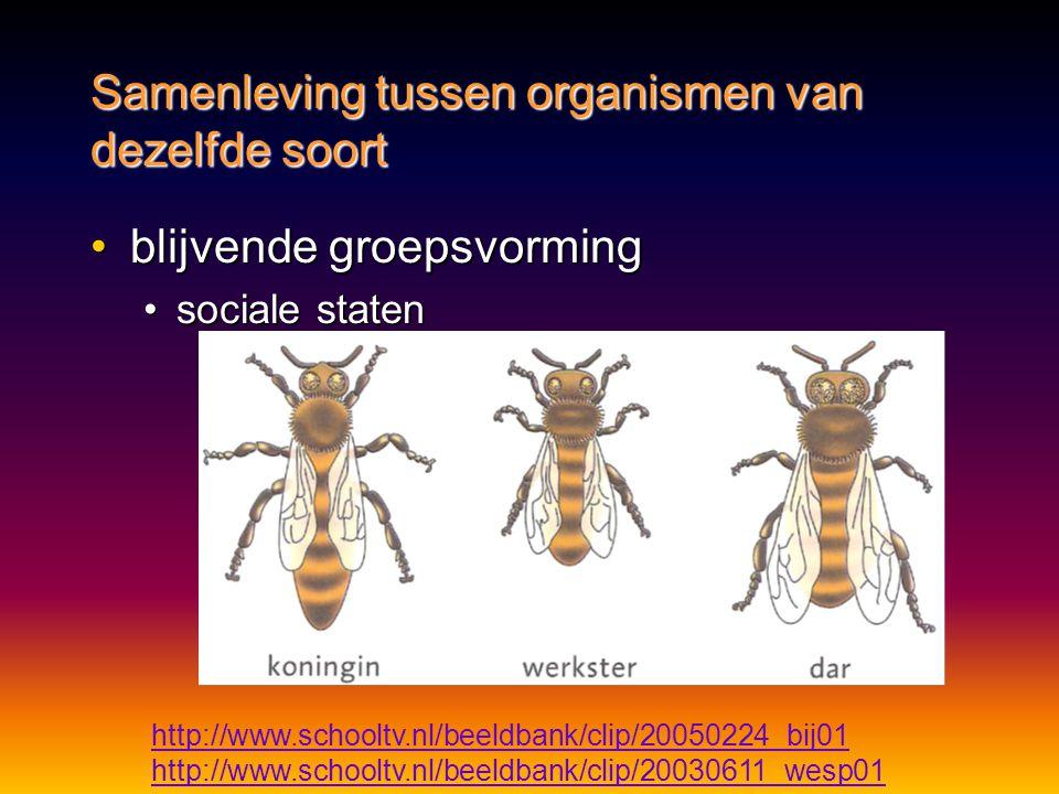 Samenleving tussen organismen van dezelfde soort