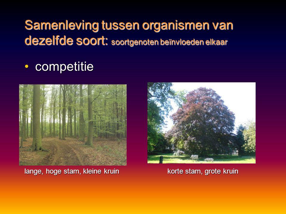 Samenleving tussen organismen van dezelfde soort: soortgenoten beïnvloeden elkaar