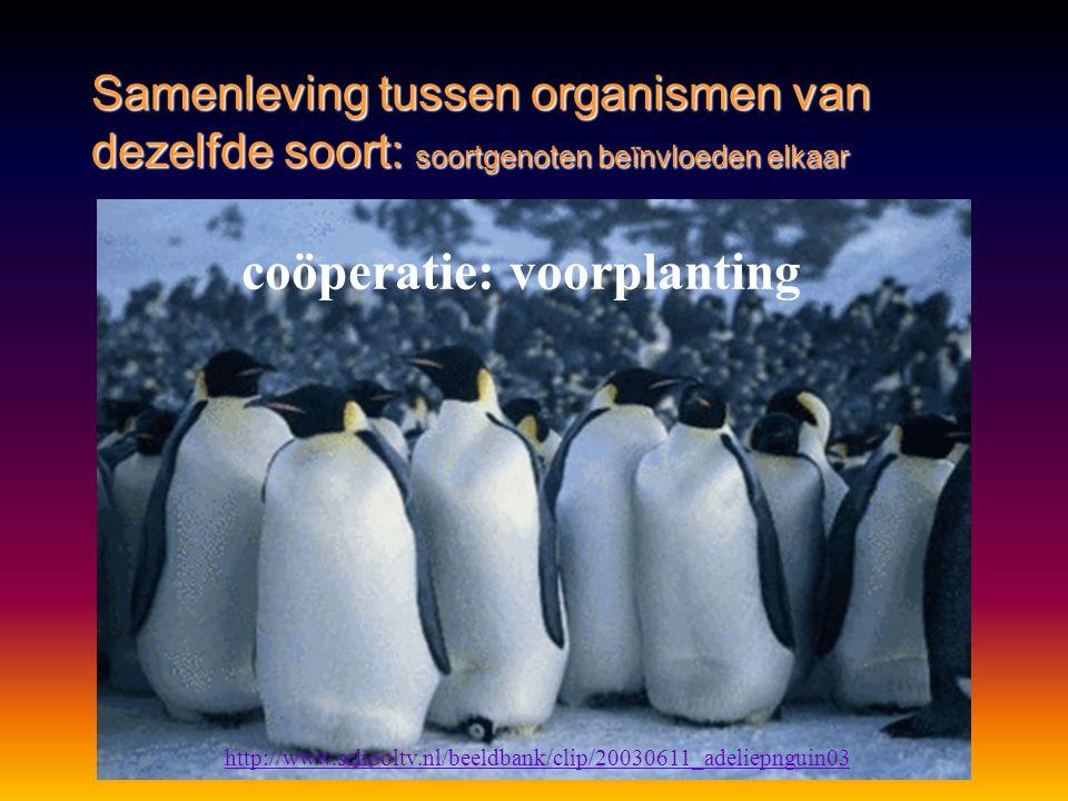 coöperatie: voorplanting