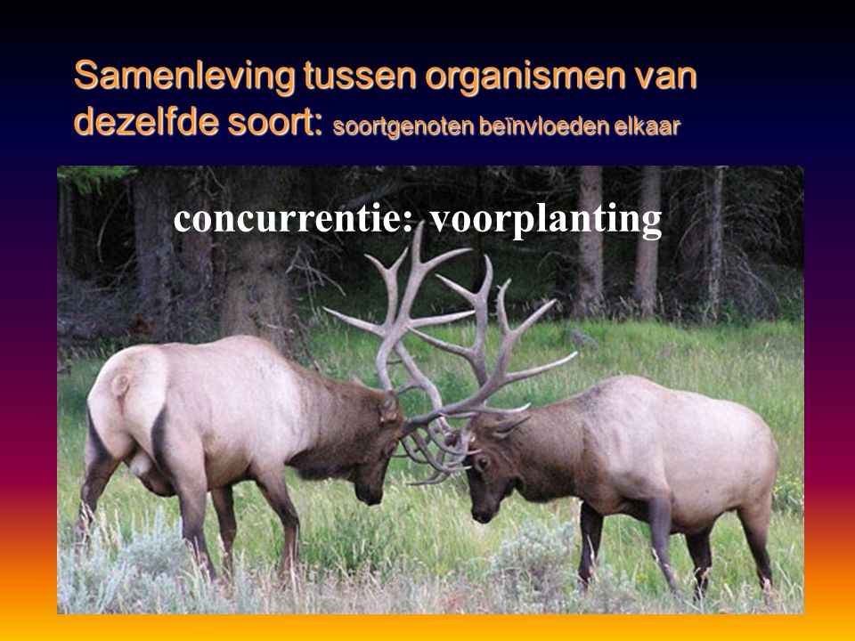 concurrentie: voorplanting