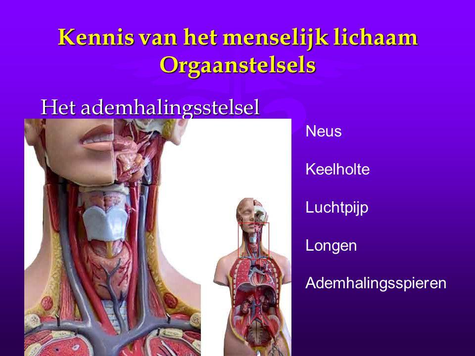 Kennis van het menselijk lichaam Orgaanstelsels