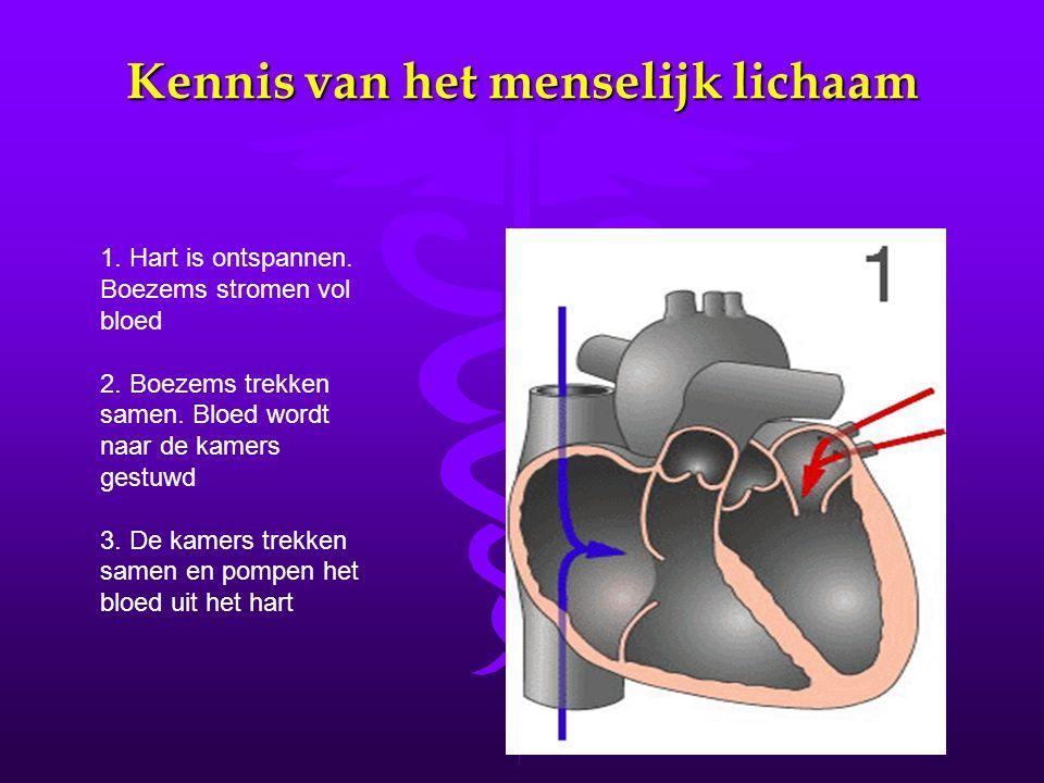 Kennis van het menselijk lichaam