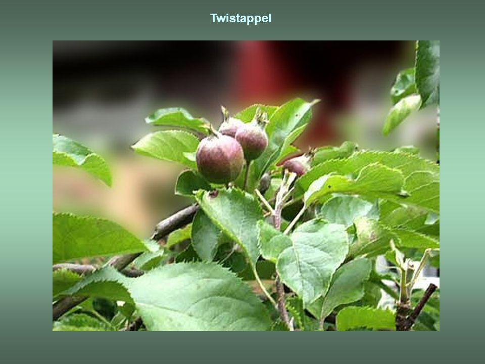 Twistappel