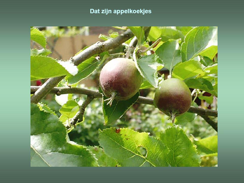 Dat zijn appelkoekjes