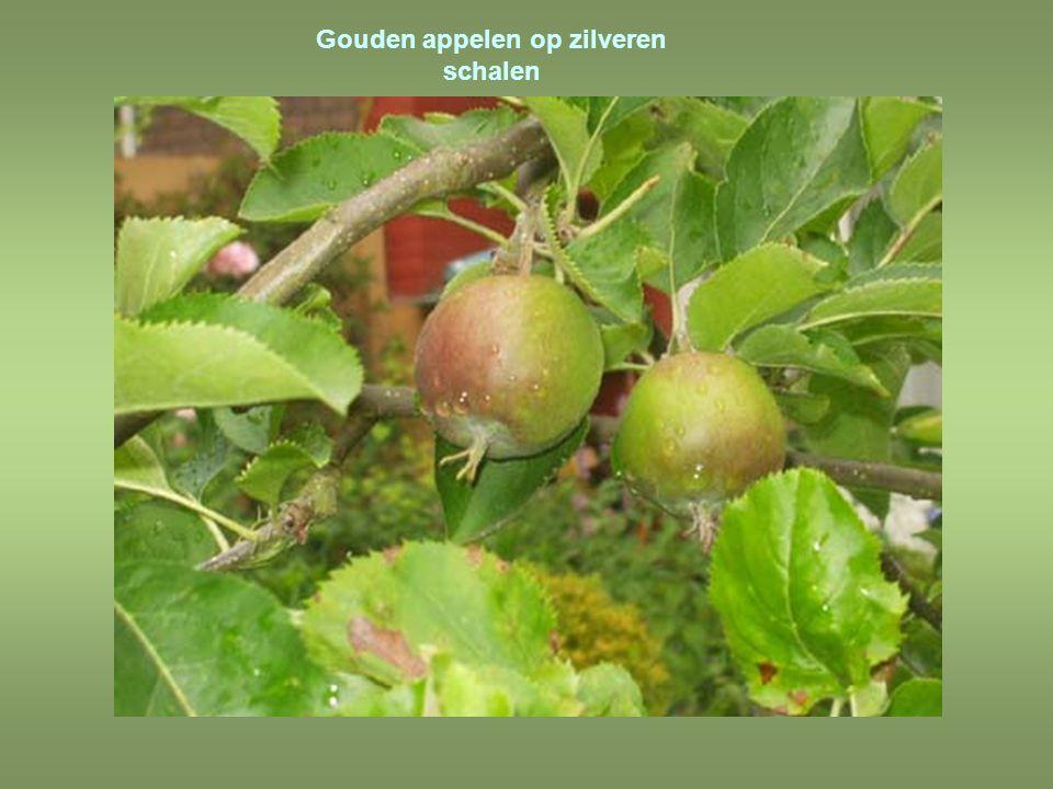 Gouden appelen op zilveren schalen