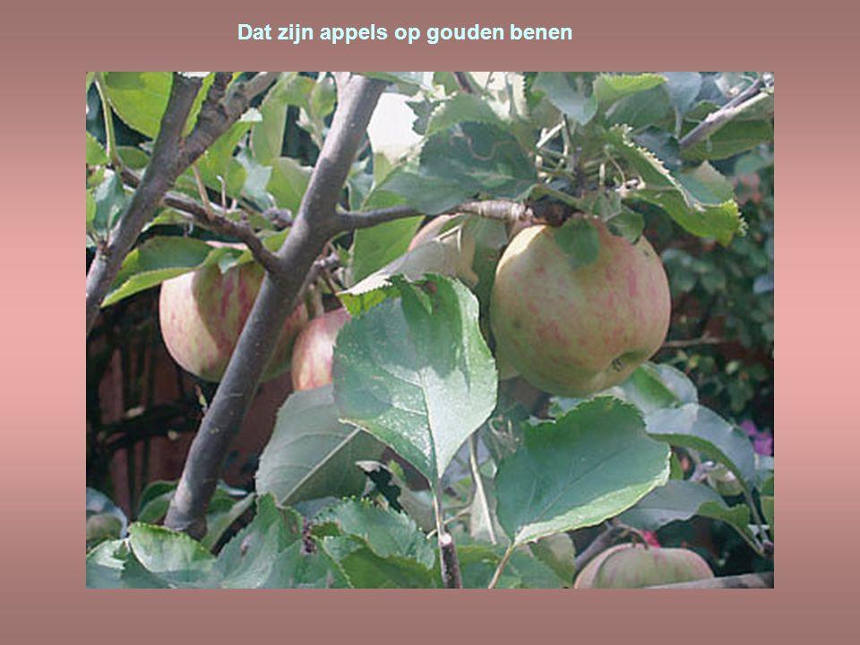Dat zijn appels op gouden benen