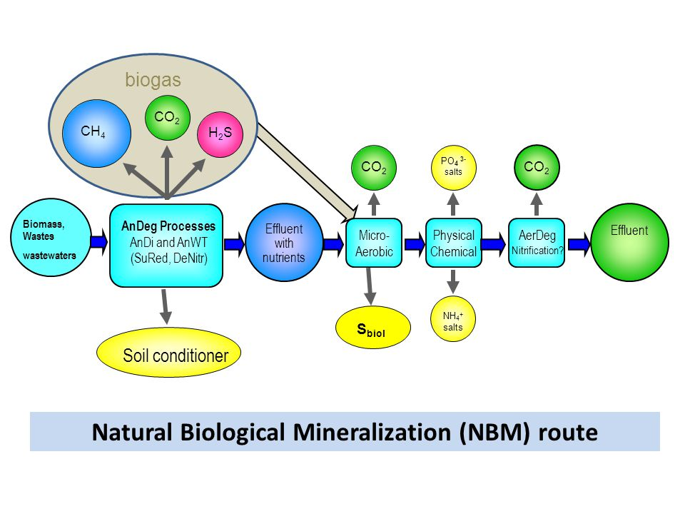 Natural Biological Mineralization (NBM) route