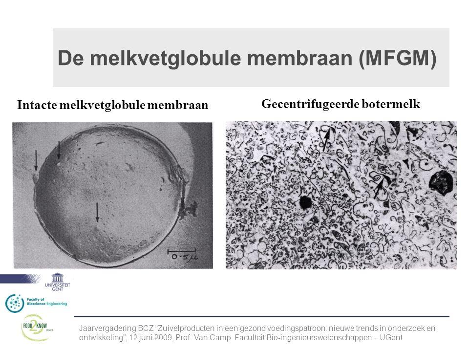 De melkvetglobule membraan (MFGM)