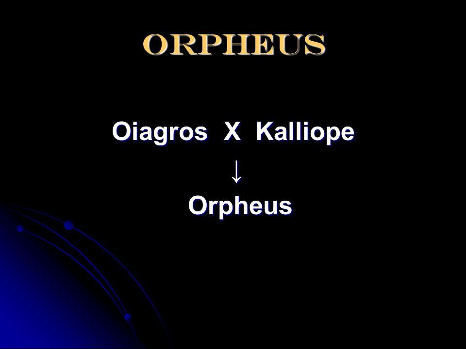 orpheus Oiagros X Kalliope ↓ Orpheus
