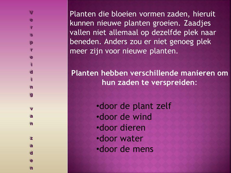 Planten hebben verschillende manieren om hun zaden te verspreiden: