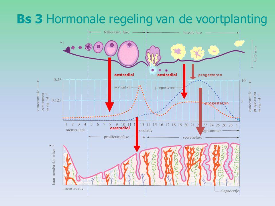 hormonale disbalans na zwangerschap