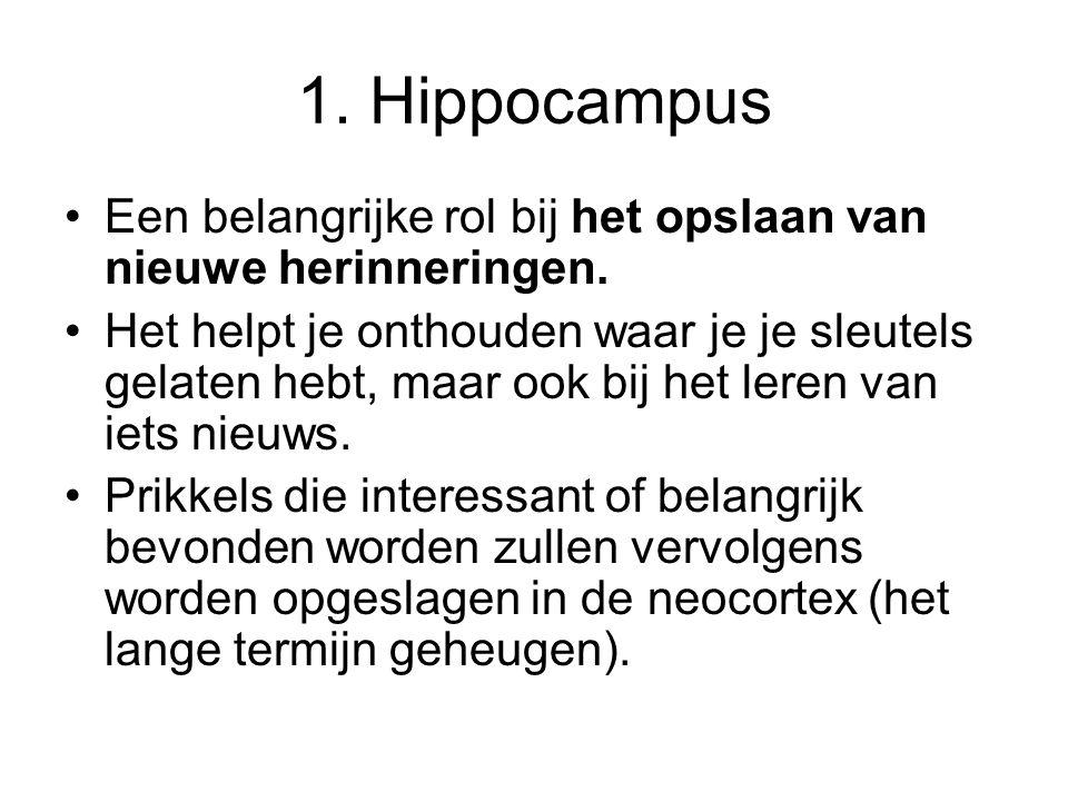 1. Hippocampus Een belangrijke rol bij het opslaan van nieuwe herinneringen.