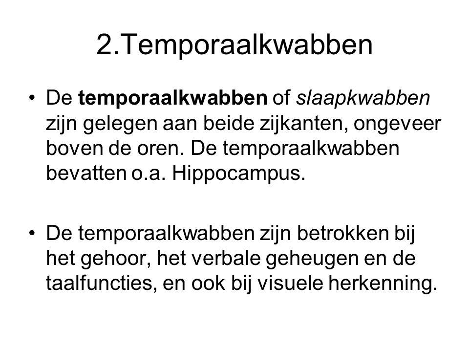 2.Temporaalkwabben