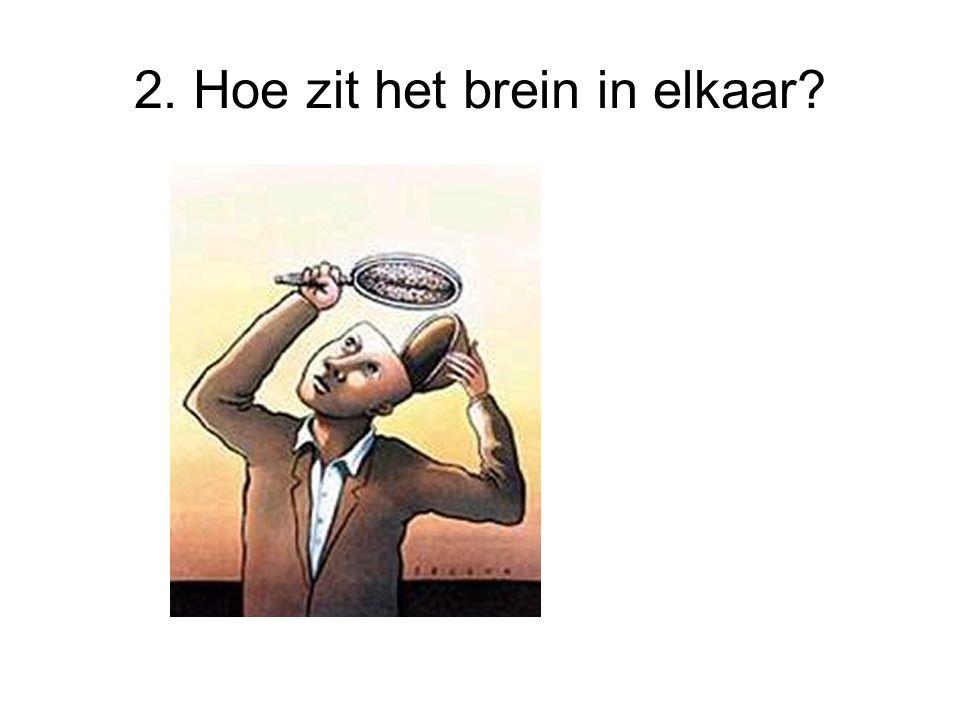 2. Hoe zit het brein in elkaar