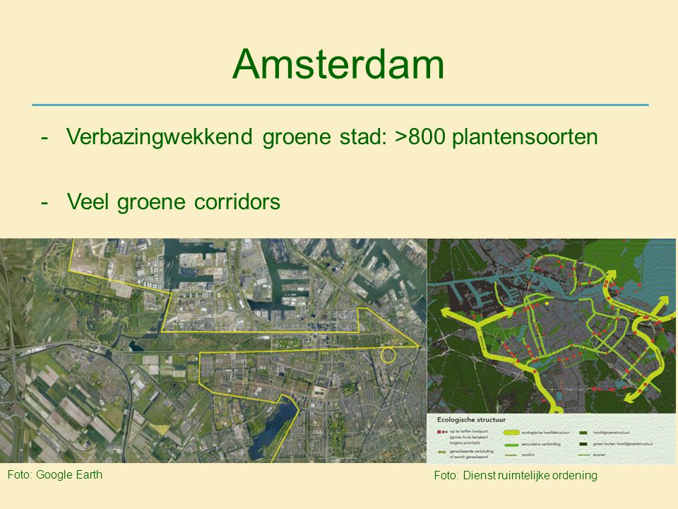 Amsterdam Verbazingwekkend groene stad: >800 plantensoorten