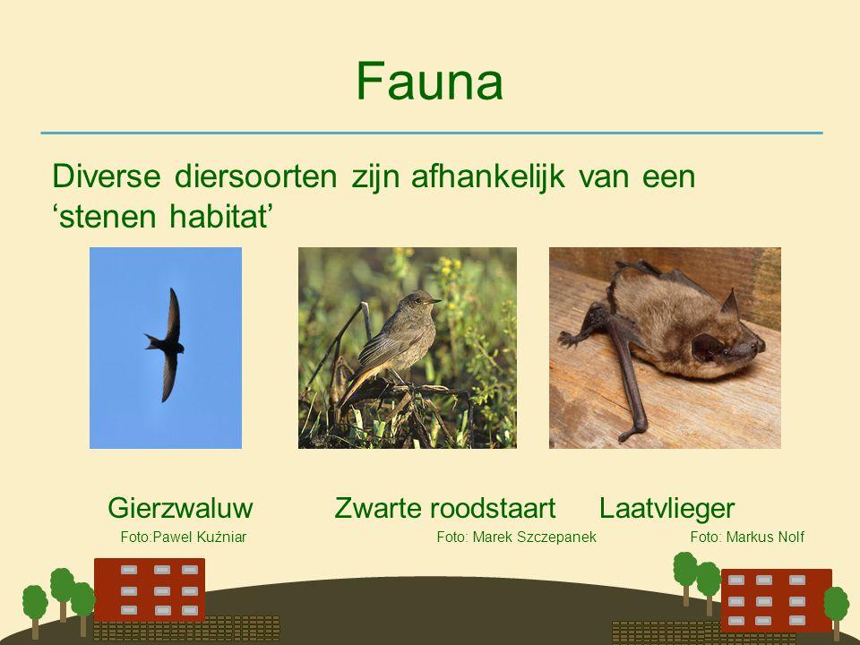 Fauna Diverse diersoorten zijn afhankelijk van een 'stenen habitat'