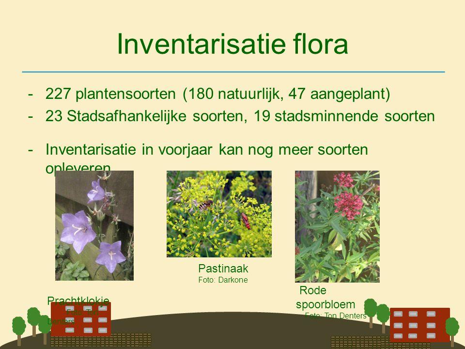 Inventarisatie flora 227 plantensoorten (180 natuurlijk, 47 aangeplant) 23 Stadsafhankelijke soorten, 19 stadsminnende soorten.