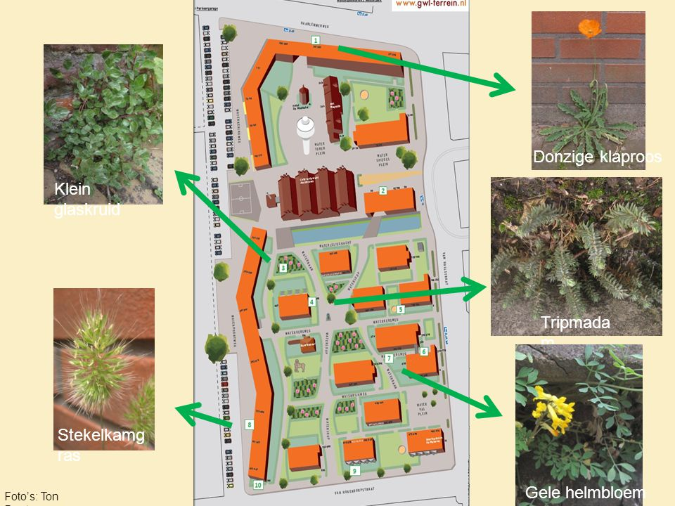 Bijzondere planten op het terrein