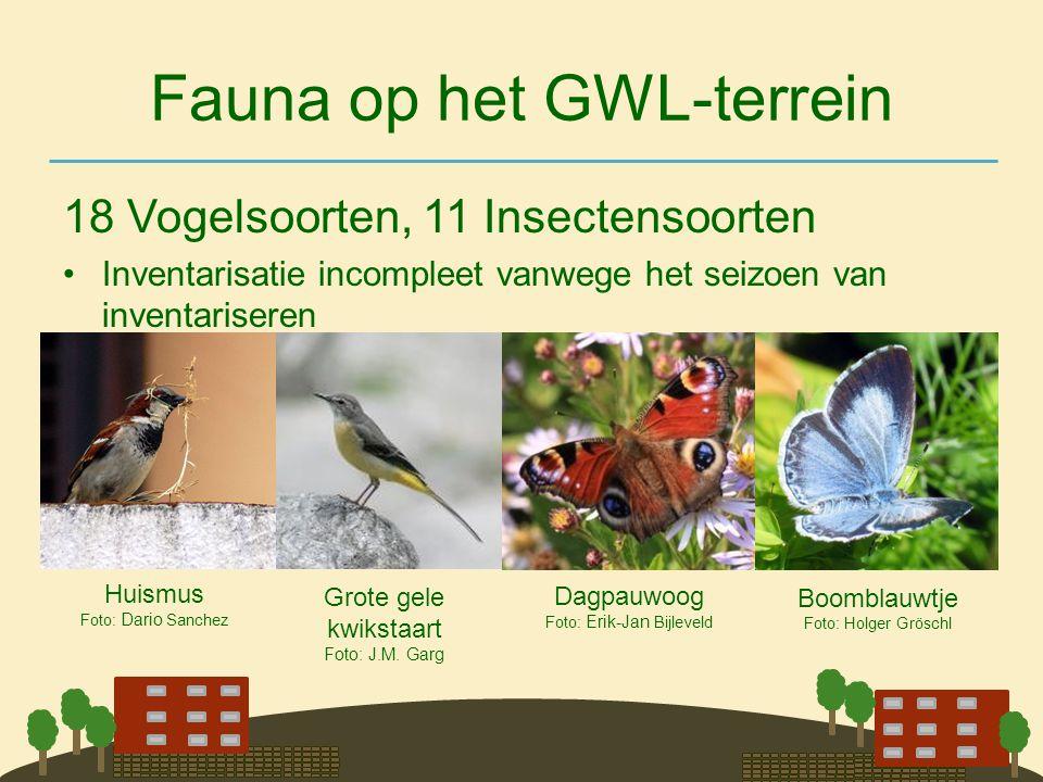 Fauna op het GWL-terrein