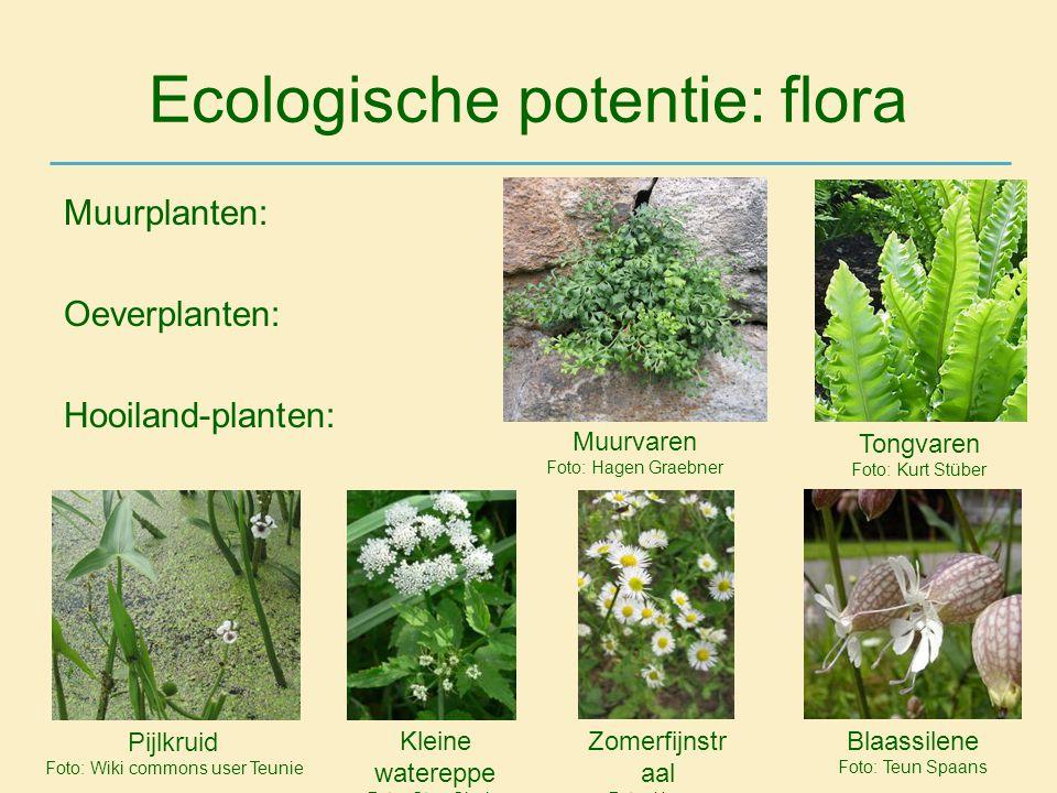 Ecologische potentie: flora