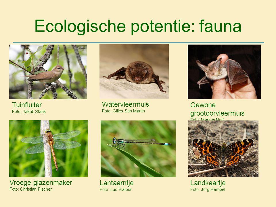 Ecologische potentie: fauna