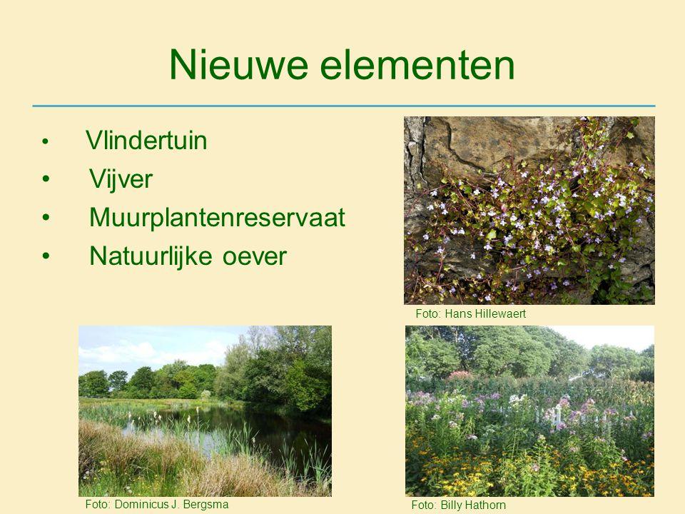 Nieuwe elementen Vijver Muurplantenreservaat Natuurlijke oever