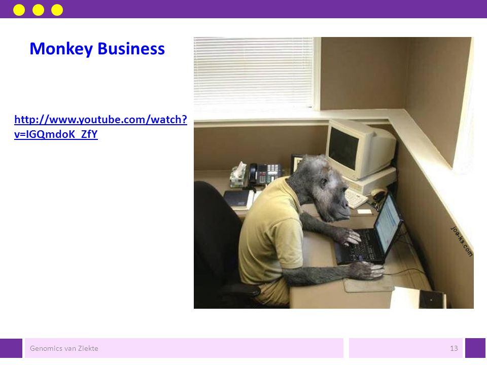 Monkey Business http://www.youtube.com/watch v=IGQmdoK_ZfY