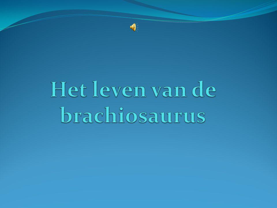 Het leven van de brachiosaurus