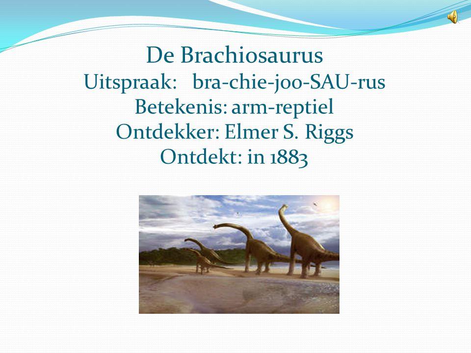 De Brachiosaurus Uitspraak: bra-chie-joo-SAU-rus Betekenis: arm-reptiel Ontdekker: Elmer S.