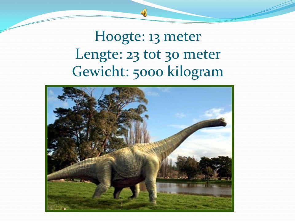 Hoogte: 13 meter Lengte: 23 tot 30 meter Gewicht: 5000 kilogram