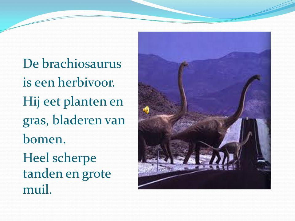 De brachiosaurus is een herbivoor. Hij eet planten en.