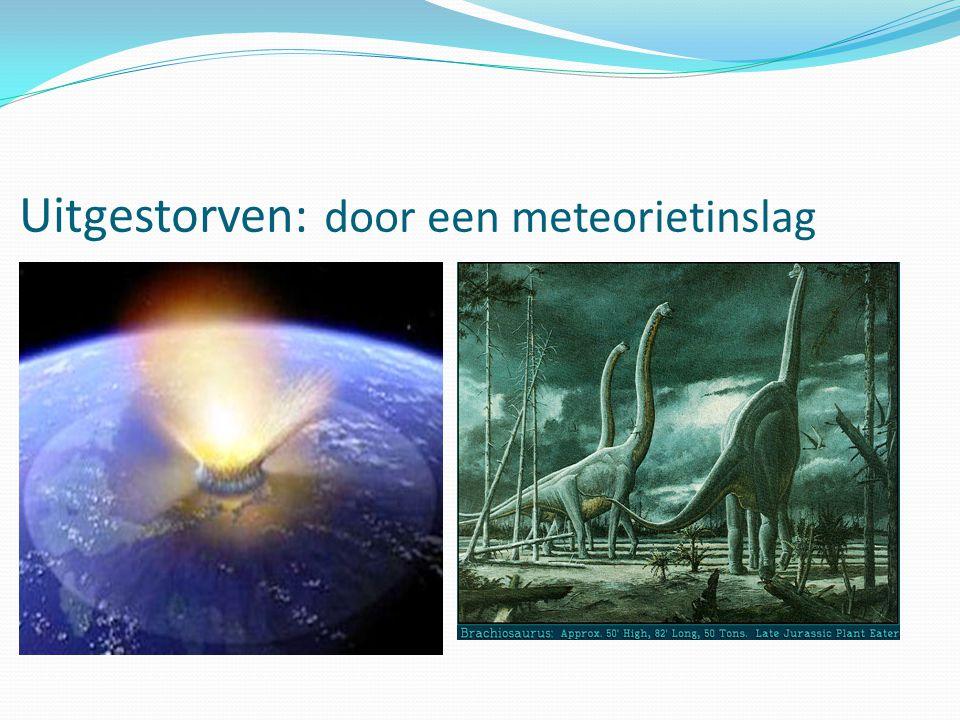 Uitgestorven: door een meteorietinslag