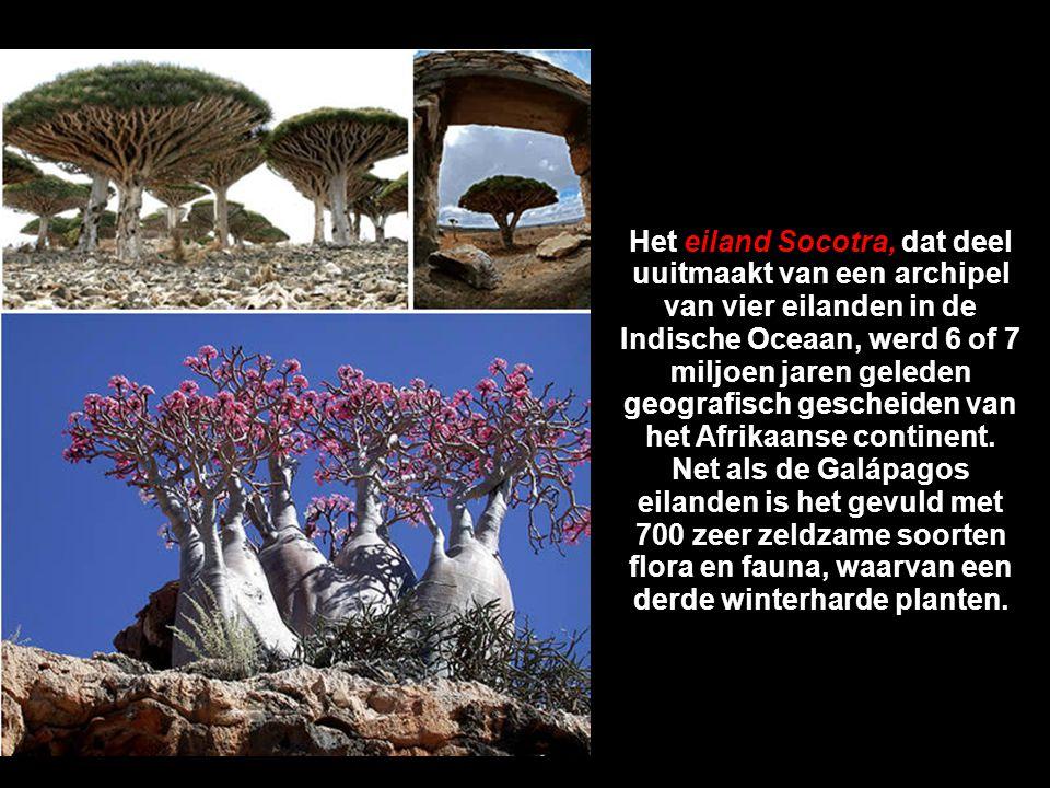 Het eiland Socotra, dat deel uuitmaakt van een archipel van vier eilanden in de Indische Oceaan, werd 6 of 7 miljoen jaren geleden geografisch gescheiden van het Afrikaanse continent.