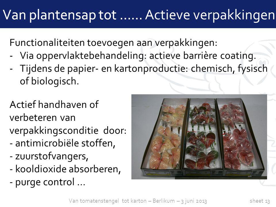 Van tomatenstengel tot karton – Berlikum – 3 juni 2013