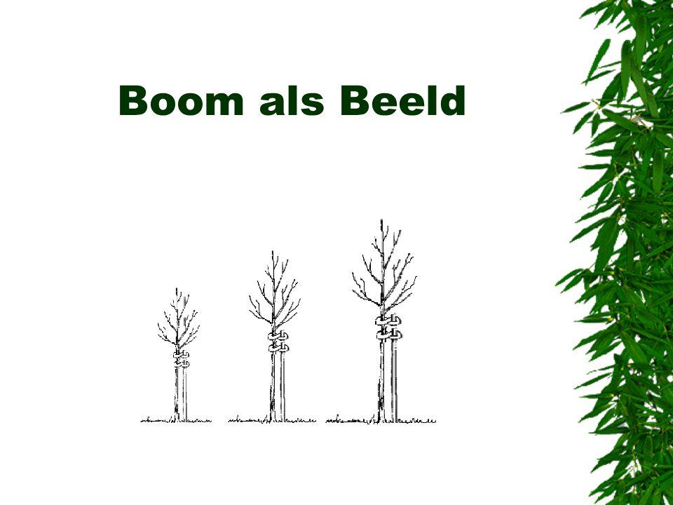 Boom als Beeld