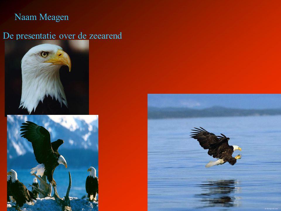 Naam Meagen De presentatie over de zeearend