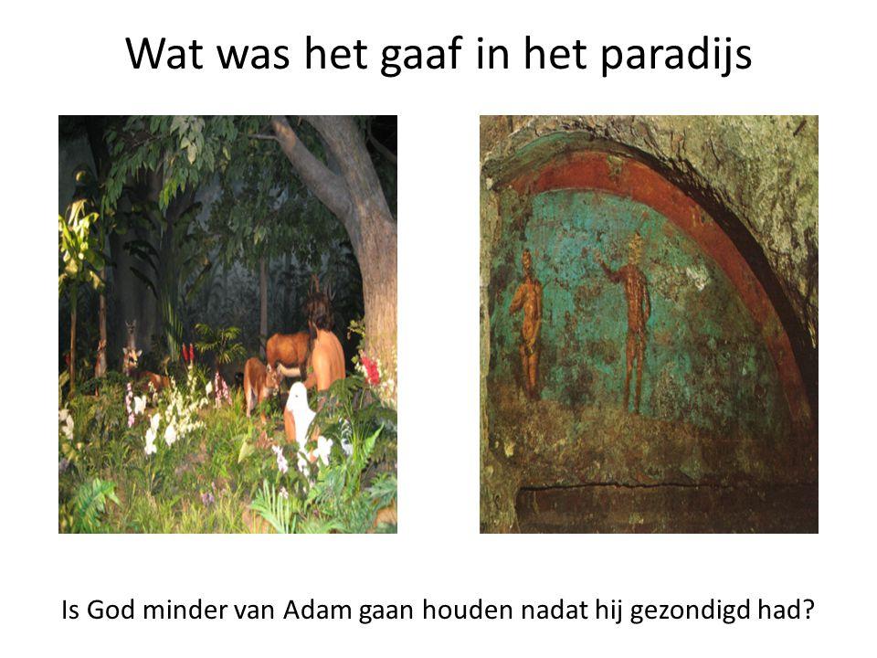 Wat was het gaaf in het paradijs