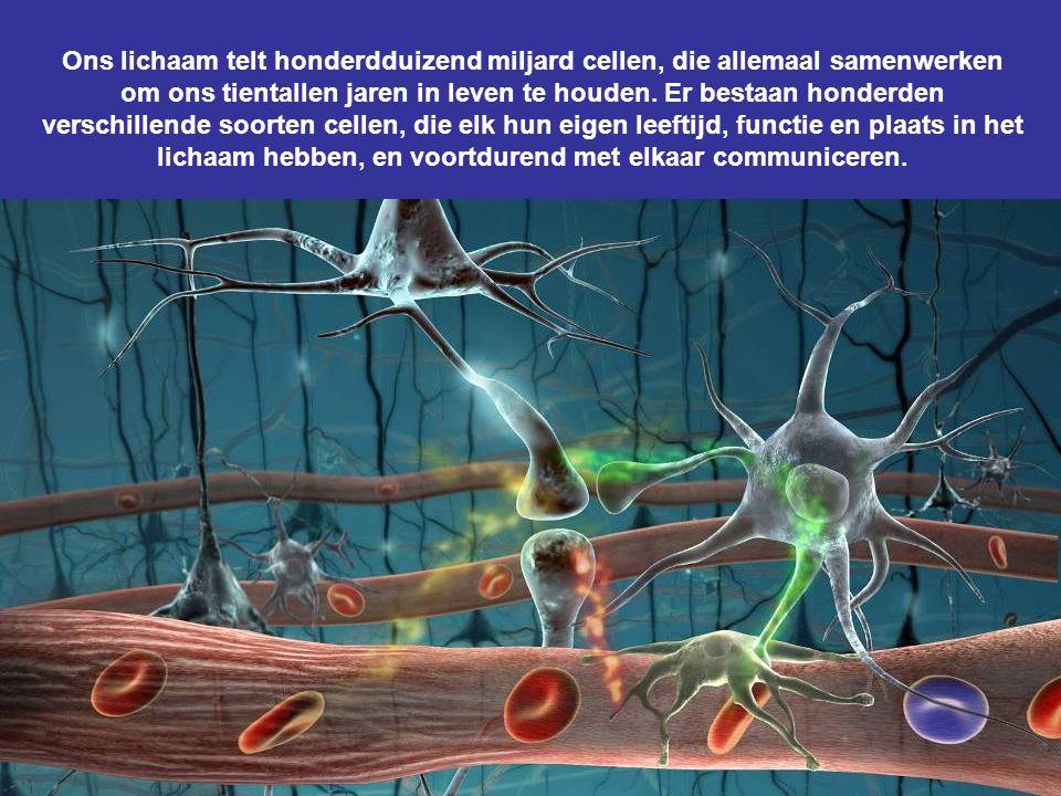 Ons lichaam telt honderdduizend miljard cellen, die allemaal samenwerken om ons tientallen jaren in leven te houden.