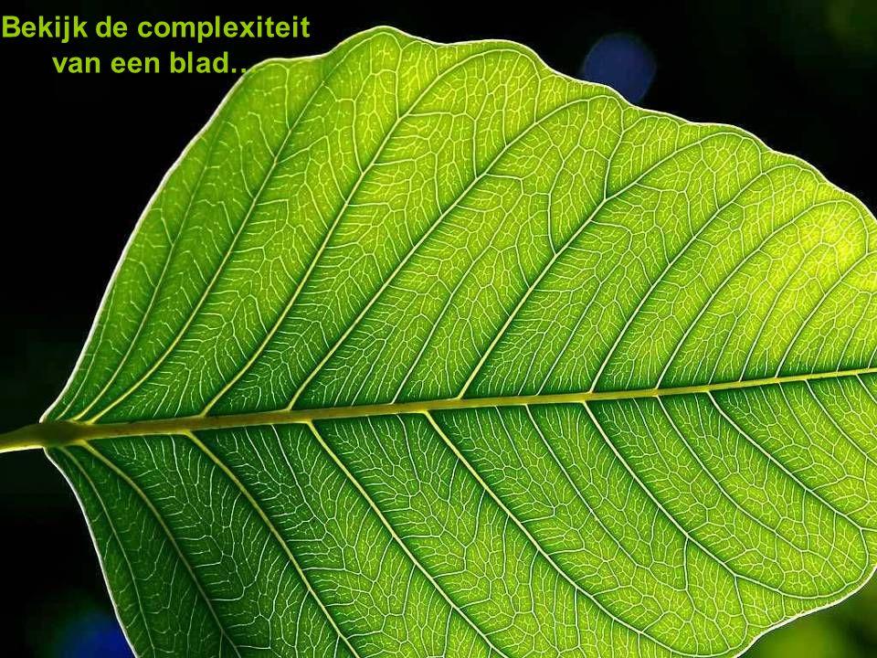Bekijk de complexiteit van een blad…