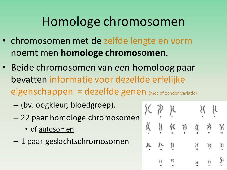Homologe chromosomen chromosomen met de zelfde lengte en vorm noemt men homologe chromosomen.